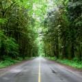 Long Green Road
